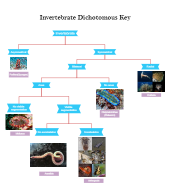 Invertebrate Dichotomous Key