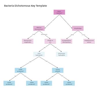 Bacteria Dichotomous Key