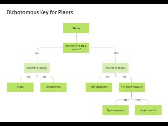 Dichotomous Key - Vertebrate Class