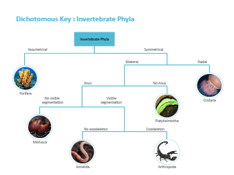 Dichotomous Key - Invertebrate Phyla