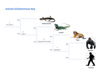 Dichotomous Key Diagram
