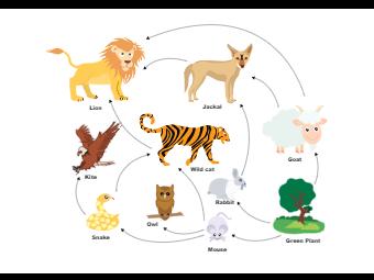 Natural Food Web