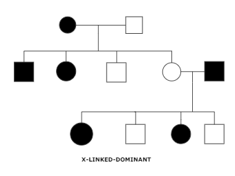 kingship diagram - x linked dominant