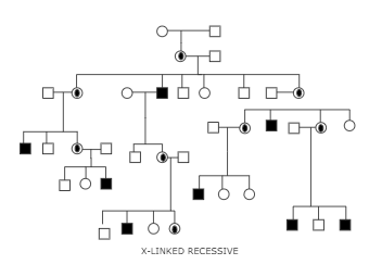 X linked recessive disorder example