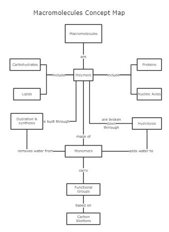 Macromolecules Concept Map Template