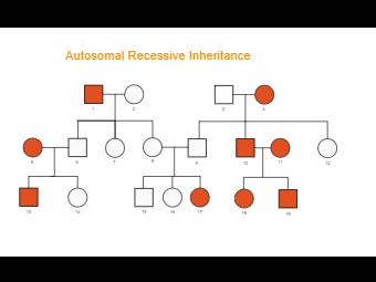 Autosomal Recessive Genogram