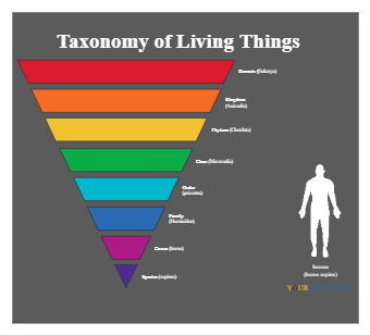 Taxonomy of Living Things