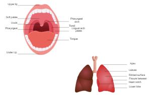 Oral Diagram