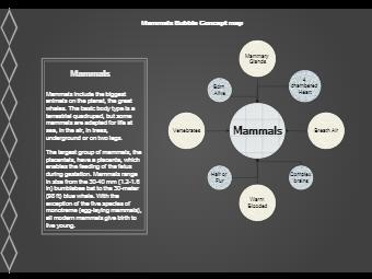 Mammals Bubble Concept Map