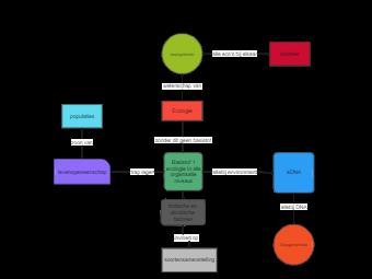 Ecosystem Concept Map