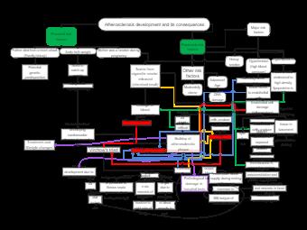Atherosclerosis Development Concept Map