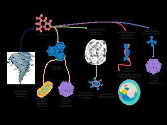 Mechanism of Cyclosporin A