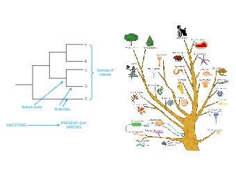 Construct A Phylogenetic Tree