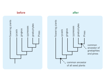 Misconception Of Phylogenetic Tree