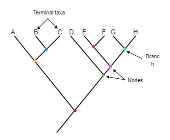 Node Phylogenetic Tree