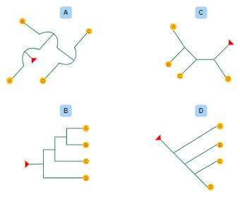 Phylogenetic Tree Explained