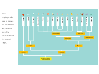 Nucleotide Sequences Phylogenetic Tree