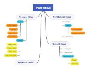 Concept of Plant Tissue