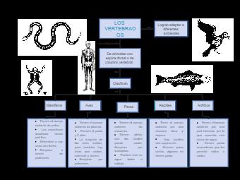 Vertebrates Concept Map