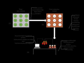 Fruit Harvest Process