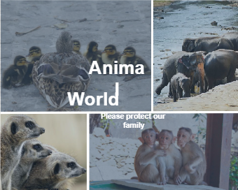 Animal Family Photo Collage